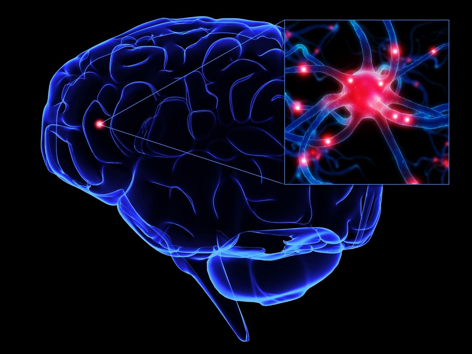 http://neurofis.com.br/img_noticias/1430239032.8-foto-0.jpeg